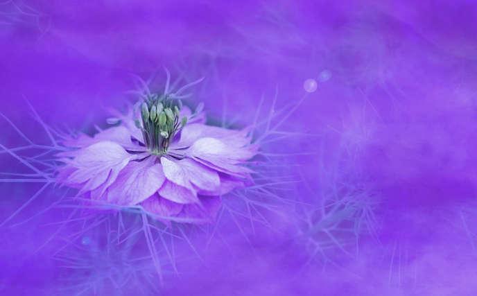 Significado del color morado o violeta